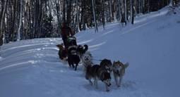 Journée chiens de traîneaux aux Monts d'Olmes dans l'ariège