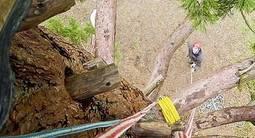 Stage de Grimpe d'arbres à proximité de Melun