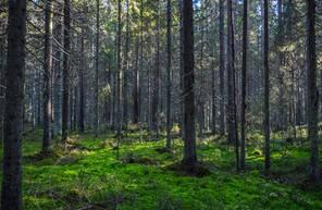 Stage de survie et rando nature en foret du Loiret près d'Orléans