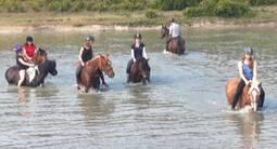 Randonnée Équestre à Cheval ou à Poney près de Valenciennes