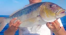Pêche au gros - sortie privée  en bateau à Propriano